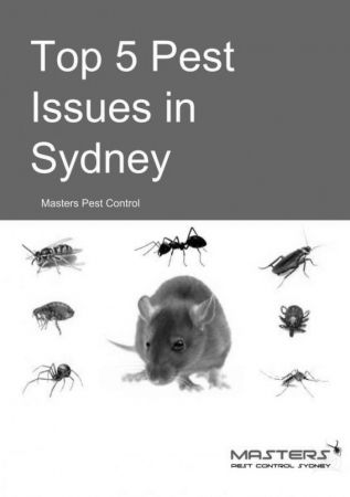 Top 5 Pest Issues in Sydney