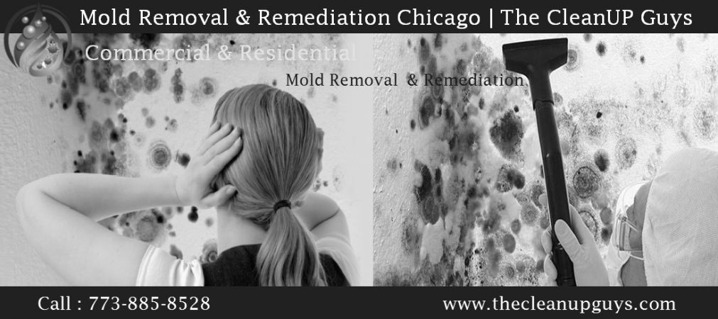 Trusted Mold Removal & Remediation Company Chicago